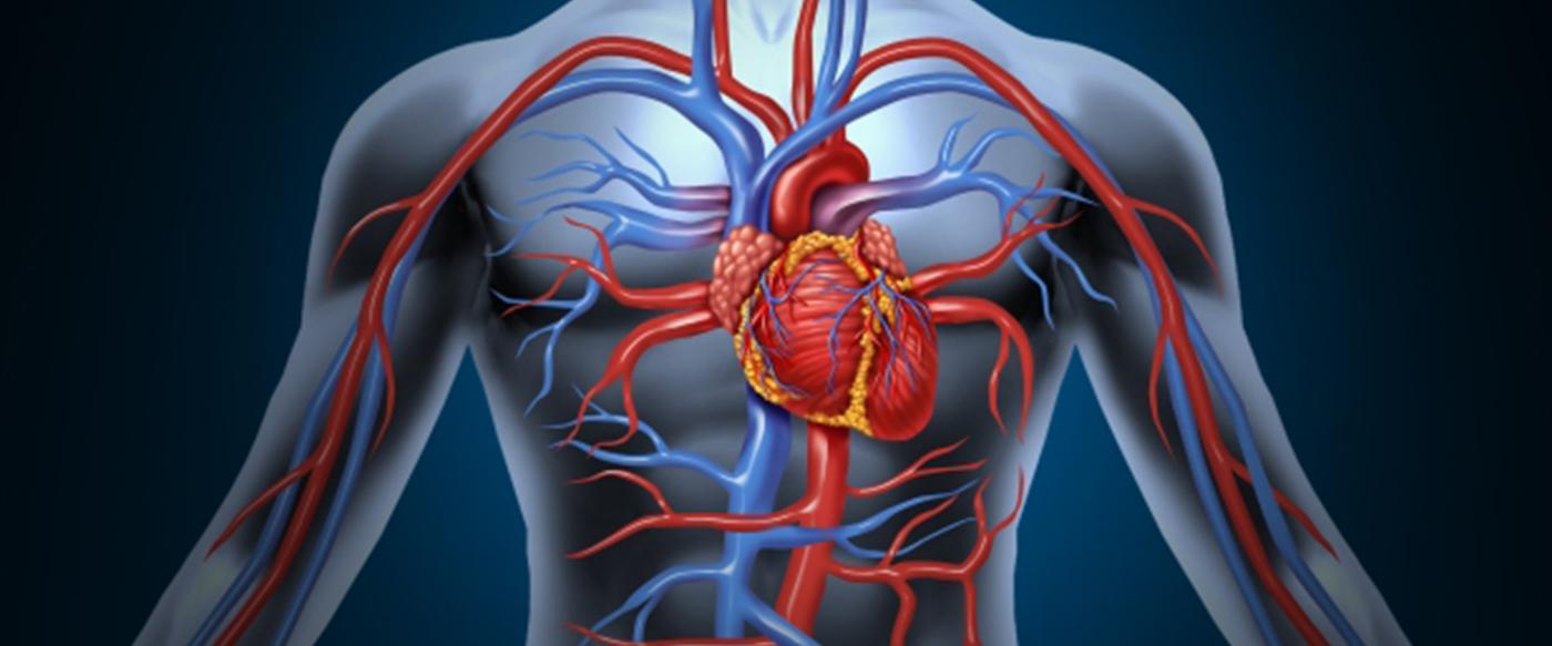 Aritmi-Kardiyoloji-Kalpte-Atım-Bozukluğu